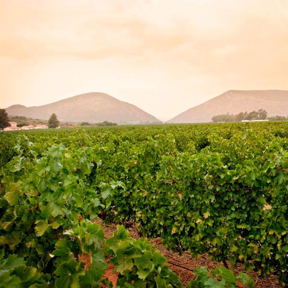 Image of Graham Beck Vineyards